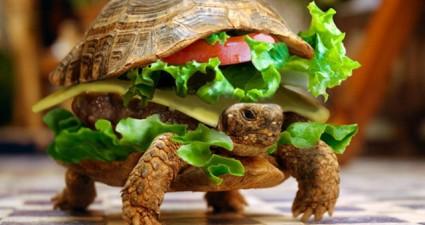 pet_turtle_burger