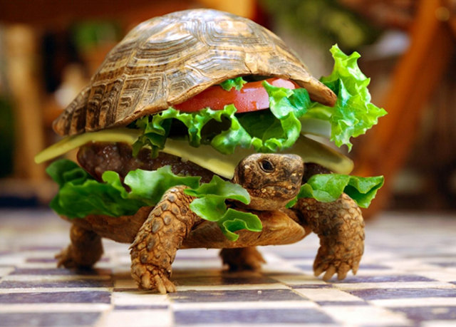 pet_turtle_burger