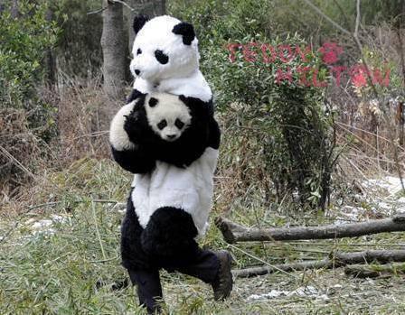 saving_baby_panda