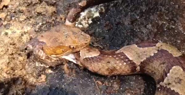 snake_bite_anyone