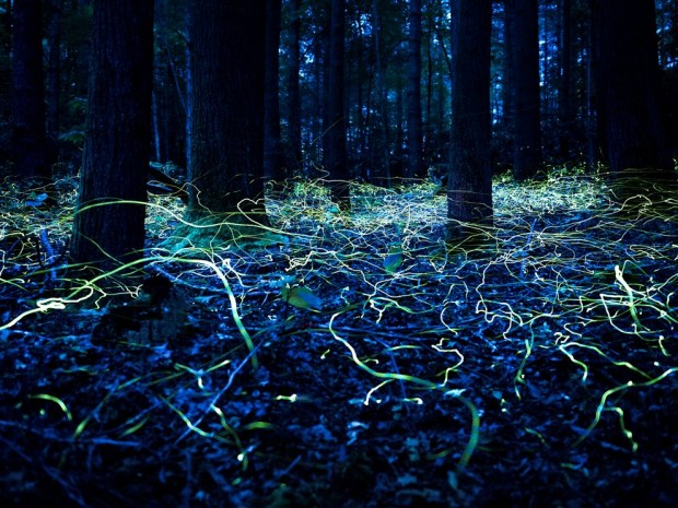 blue_ghost_fireflies