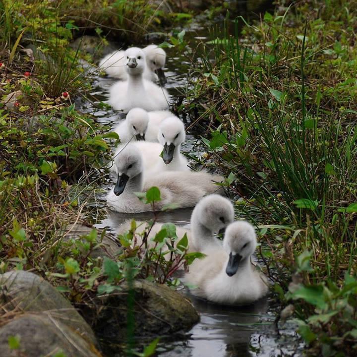 ducks_in_a_row