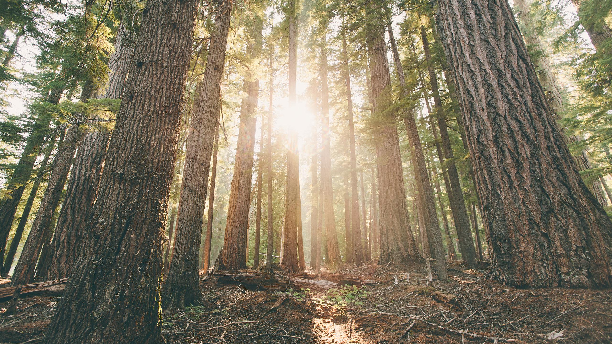 light_in_forest_wallpaper_2560x1440