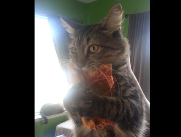 my_pizza