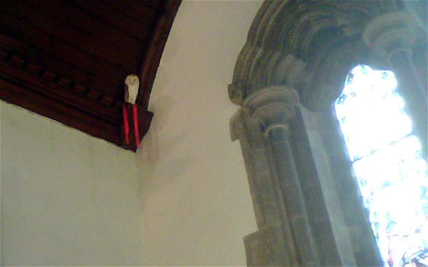owl in church