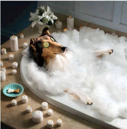 spoiled_dog
