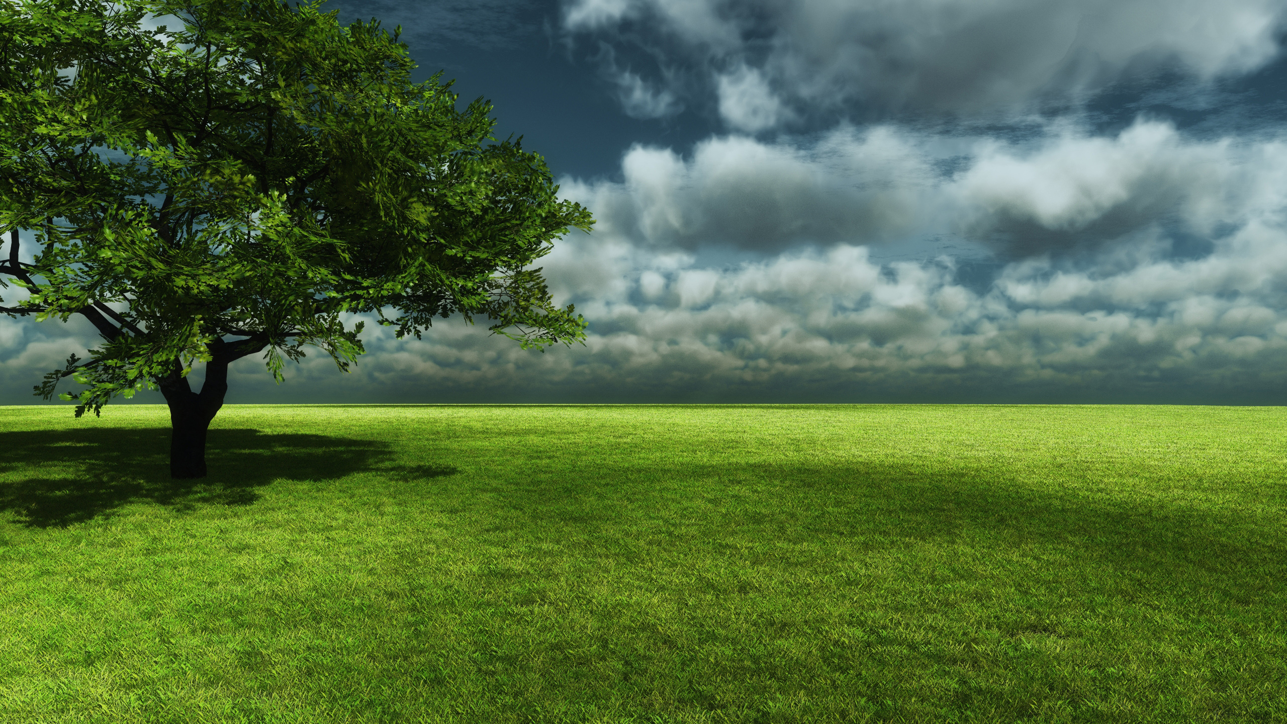 tree_of_life_wallpaper_2560x1440