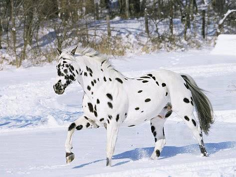beautiful_horse