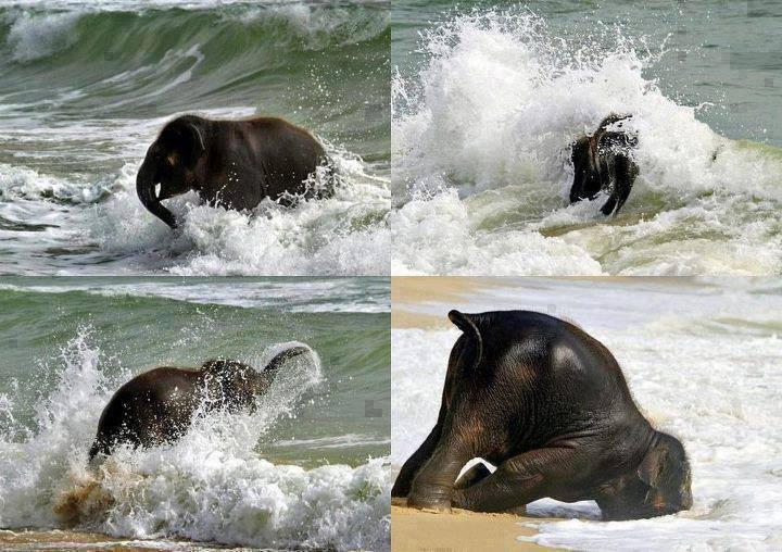 elephant_on_beach