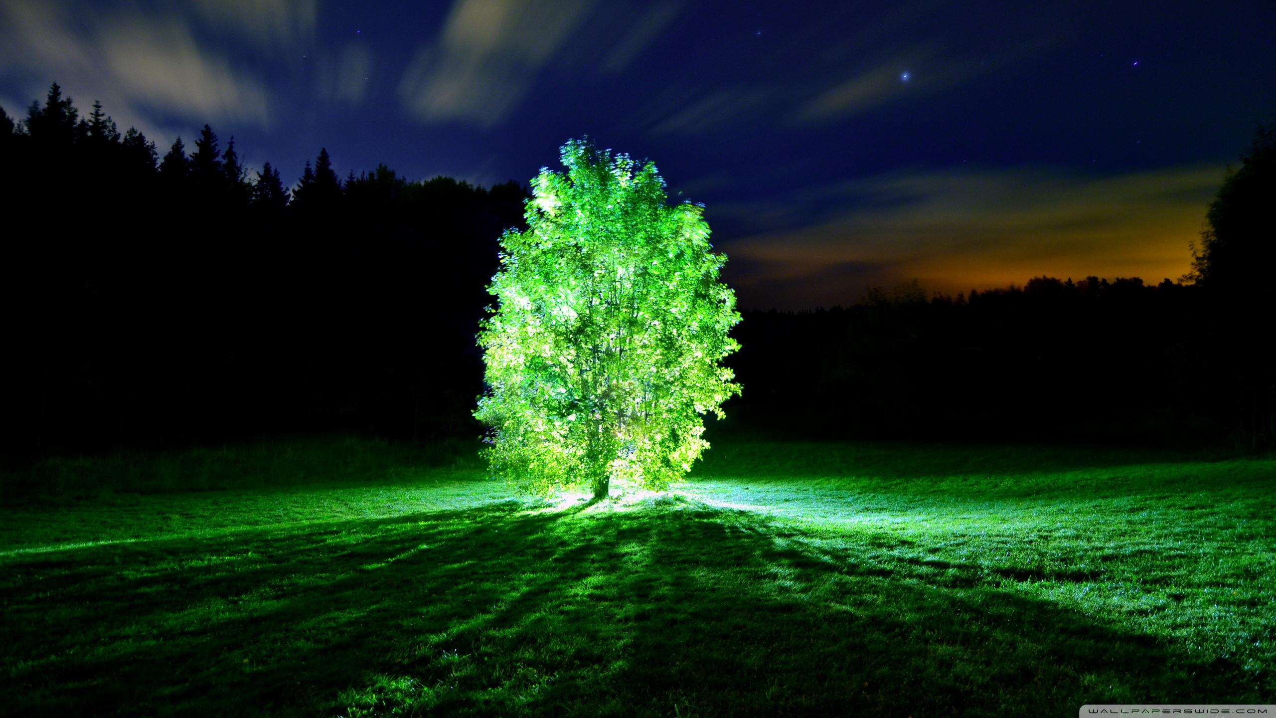 glowing_tree-wallpaper-2560x1440