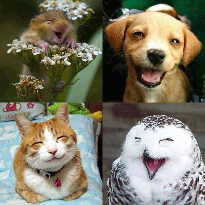 happy_animals_smiling