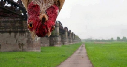 photobombing_rooster