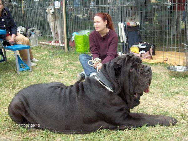 really_large_dog