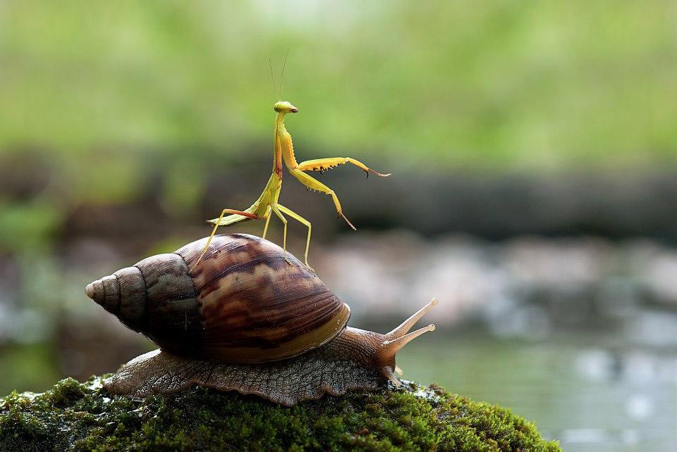 snails_1