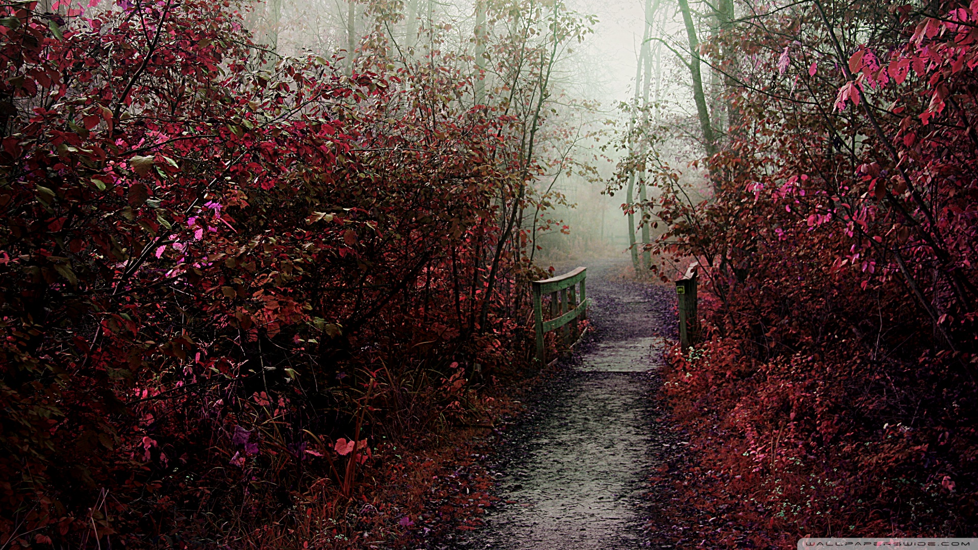 autumn_mist_path-wallpaper-1920x1080