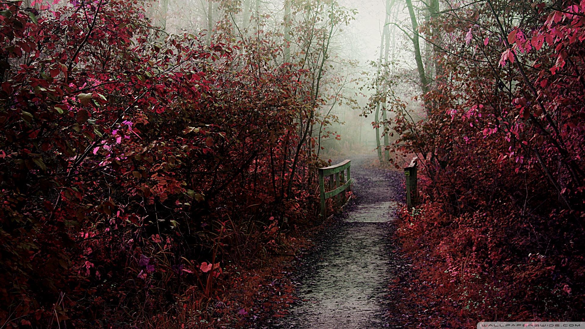 autumn_mist_path-wallpaper-1920x1080