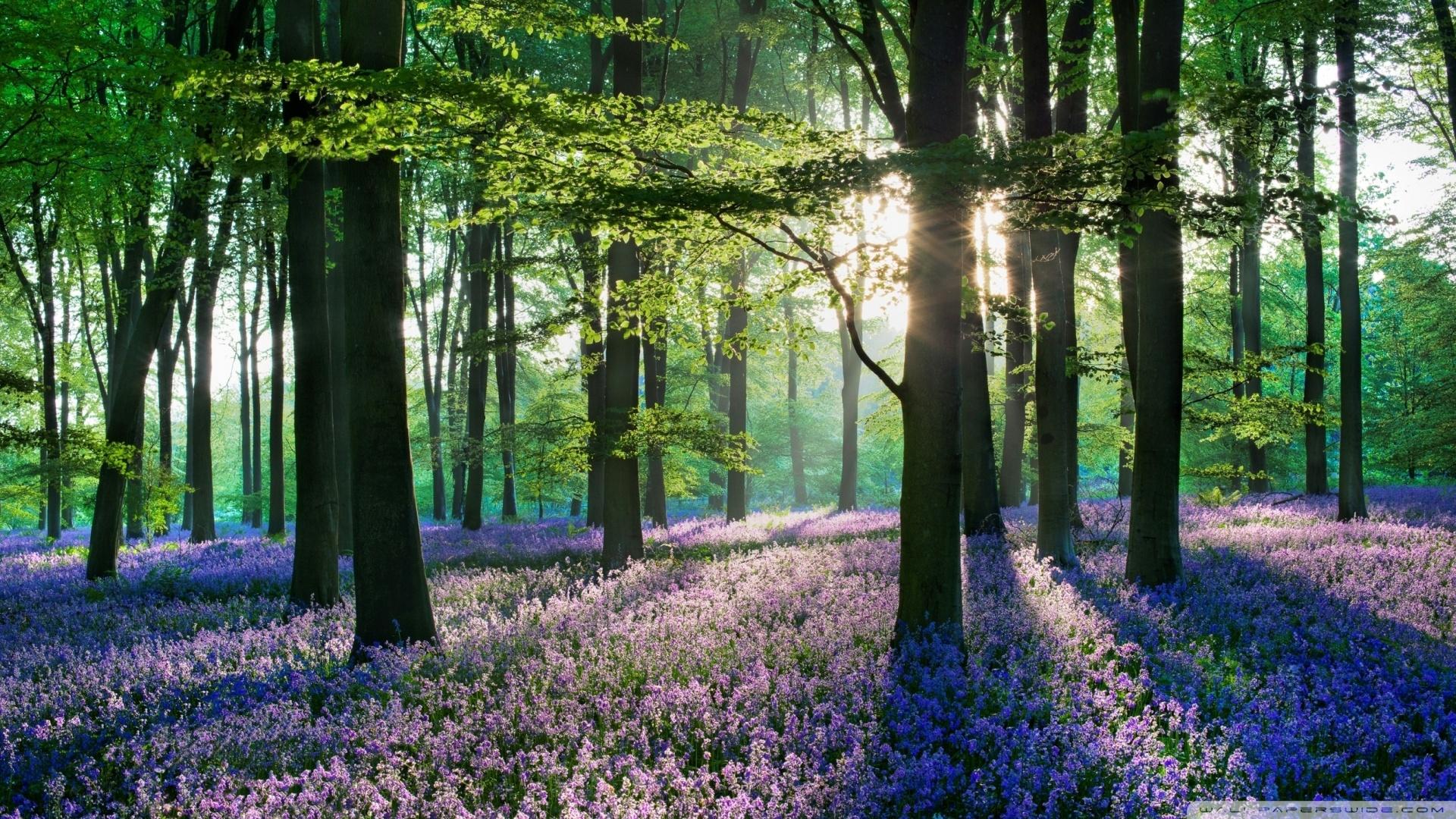 violet_forest_flowers_field-wallpaper-1920x1080