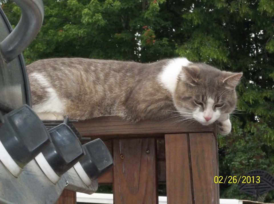 buddy the cat