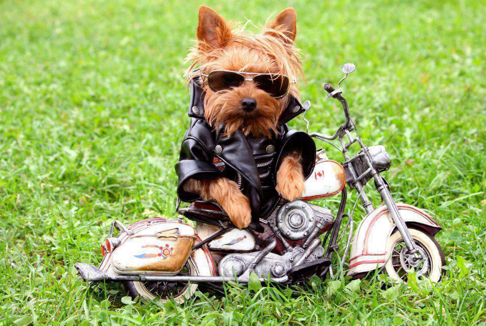 dog bike