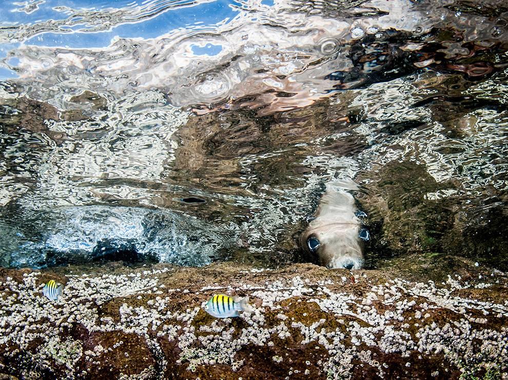 sea-lion-midriff-islands_74386_990x742