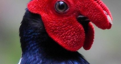 some weird bird