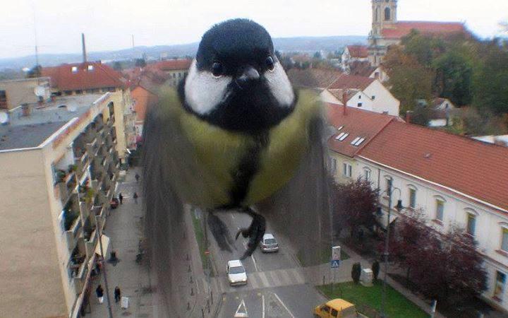 sy bird