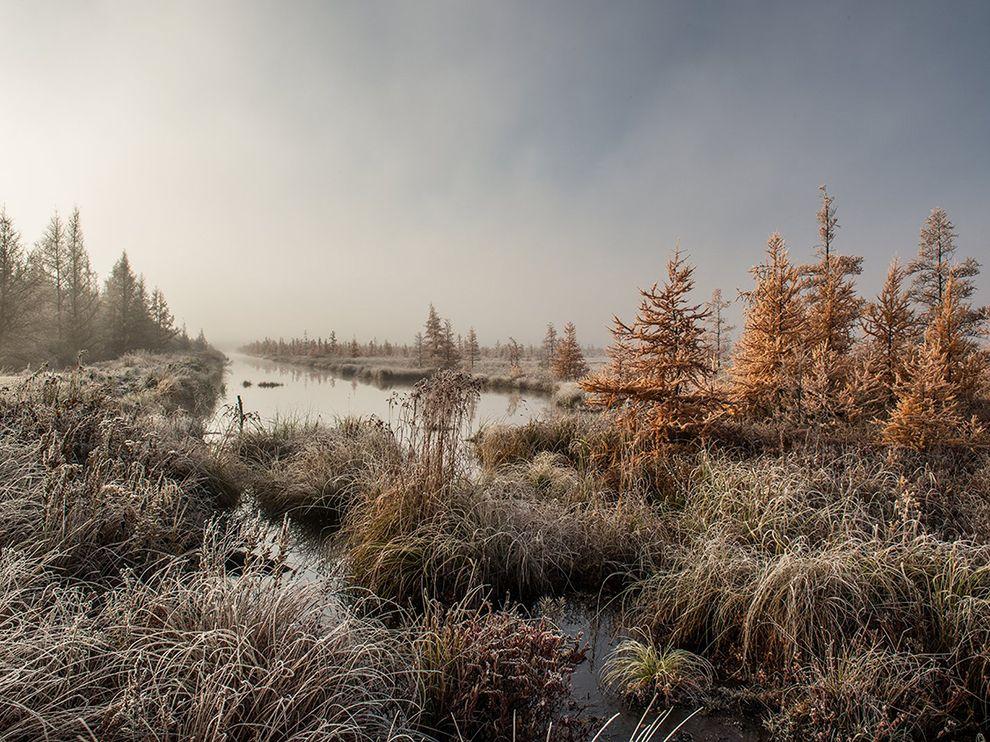 tamarack-swamp-wisconsin_74389_990x742