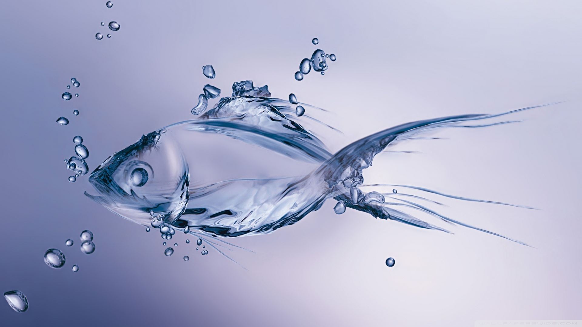 water_fish-wallpaper-1920x1080
