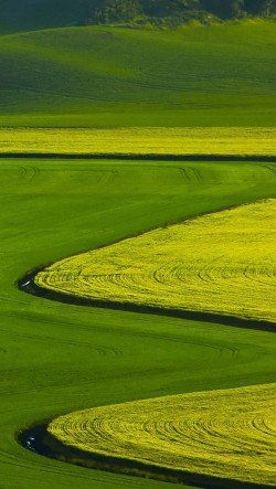 Curved-Farmland-250x443