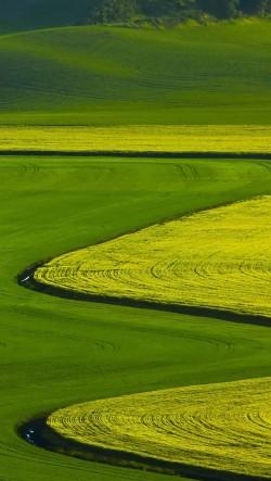 Curved-Farmland-250x443