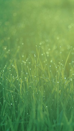 Green-Grass-Bokeh-250x443