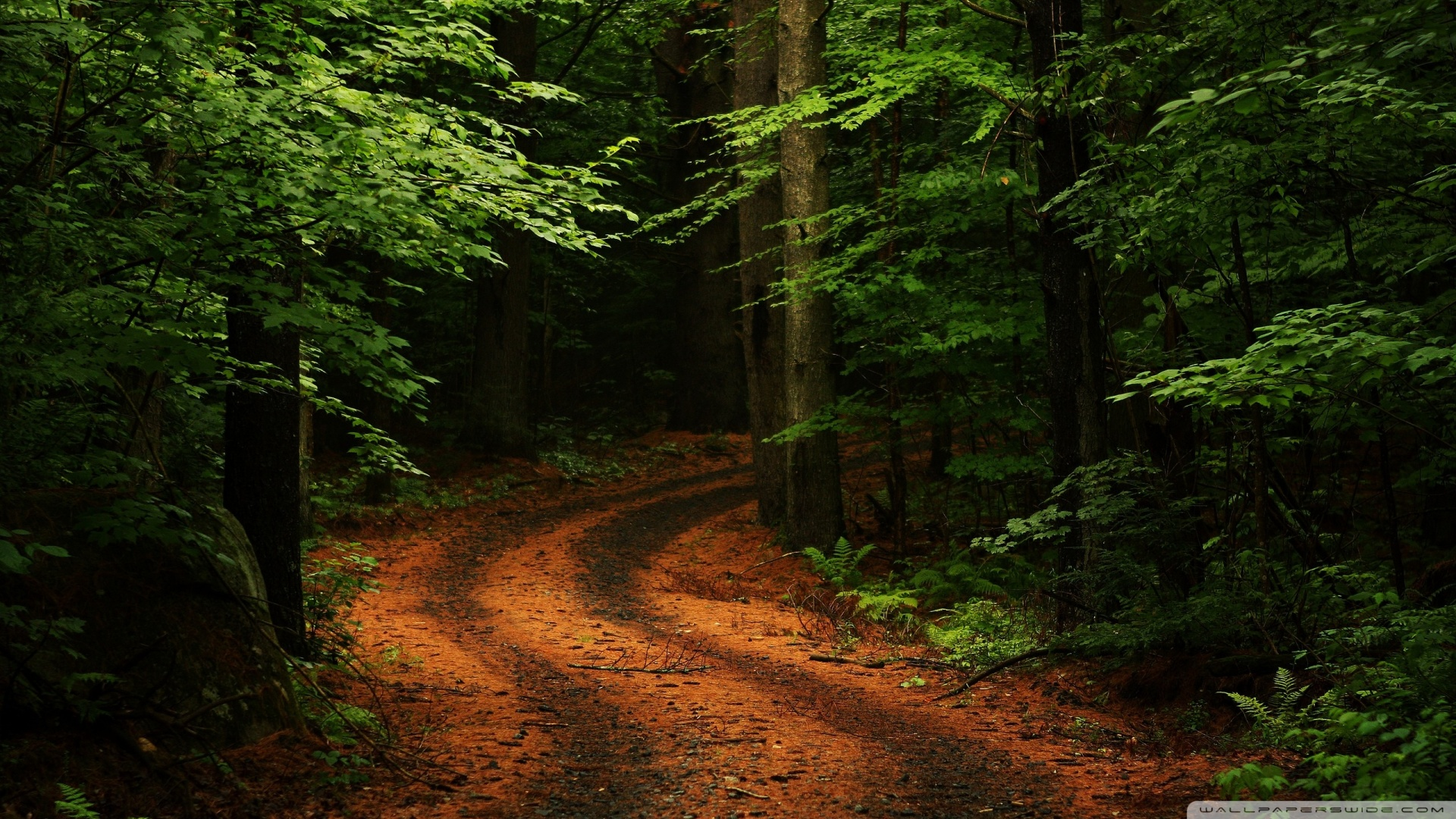 beautiful_forest_path_2-wallpaper-1920x1080