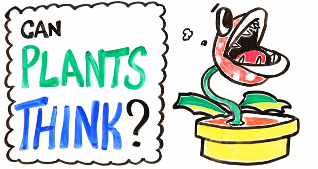 can plants think