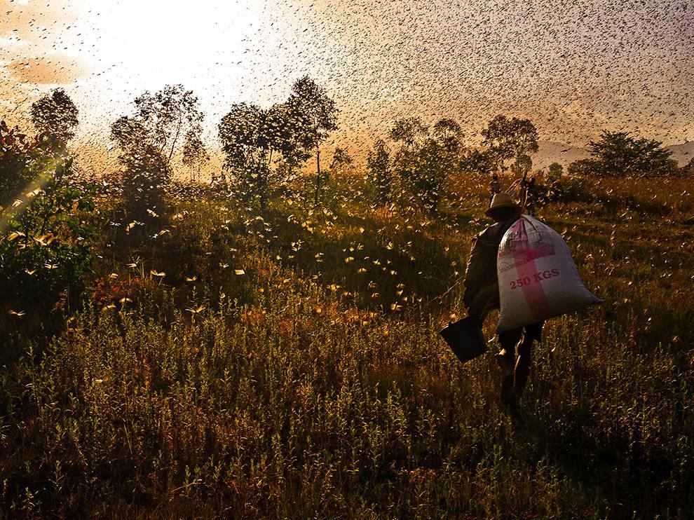 locust-gatherer-madagascar_74616_990x742