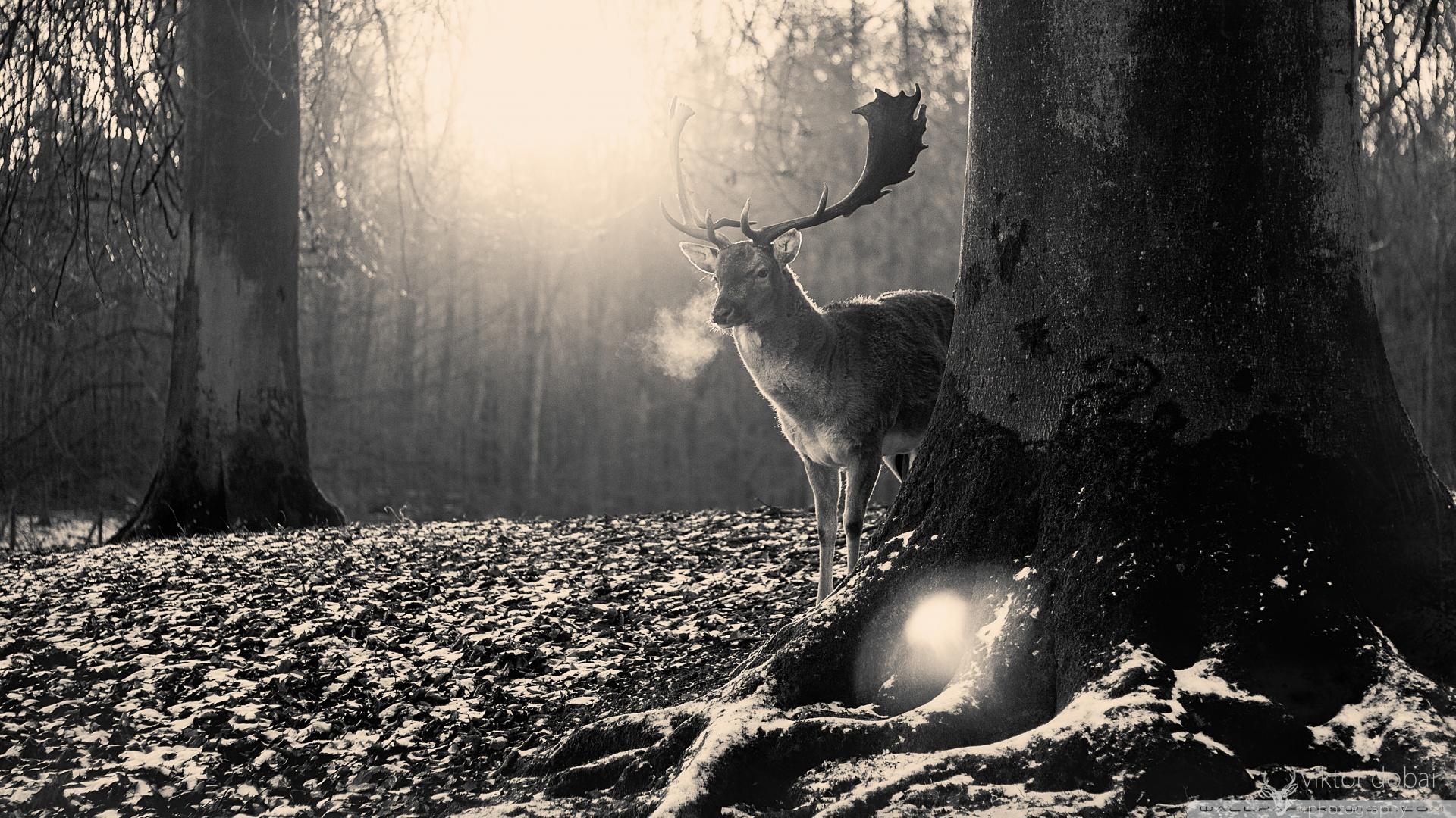 stag_winter-wallpaper-1920x1080