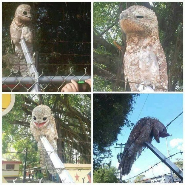 weird bird