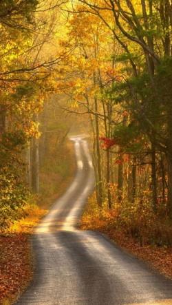 Autumn-Path-250x443