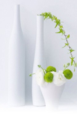 Green-Plants-In-White-Bottles-250x443