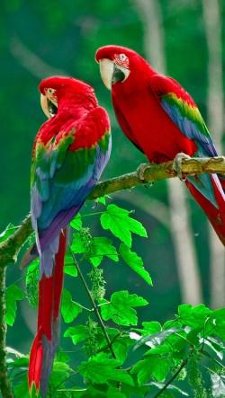 Parrots-Paradise-250x443