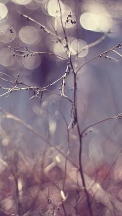 Winter-Branches-Bokeh-250x443