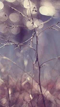 Winter-Branches-Bokeh-250x443
