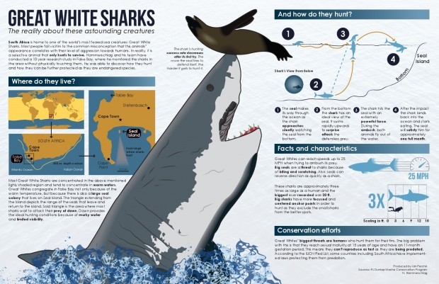 the-science-behind-great-white-shark-predation
