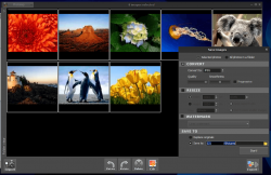 Photoimp Export Tool