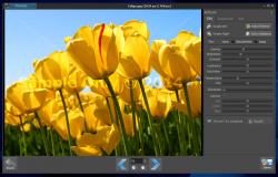 Photoimp for Windows