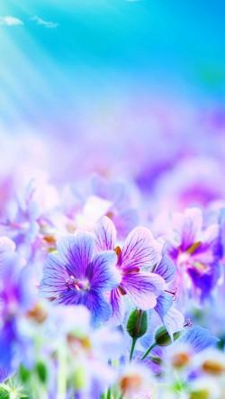 Pink-Purple-Flowers-250x443
